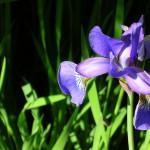 flower-70065_640
